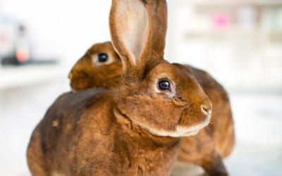 Kaninchenimpftag 04. März