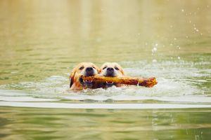 Aktuelle Information zur Leptospirose beim Hund