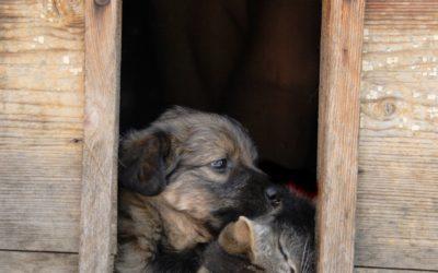 Entwurmung von Hund und Katze