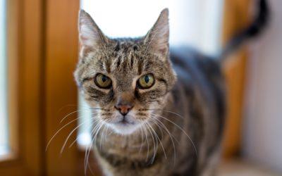 Katzenprojekt in Rockenberg sucht Unterstützung